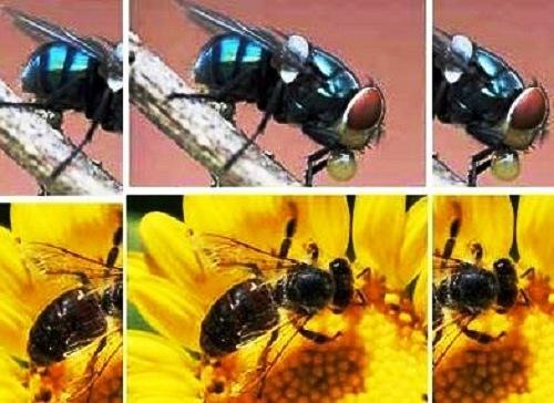 Belajar Hidup Bahagia dari Seekor Lebah dan Lalat